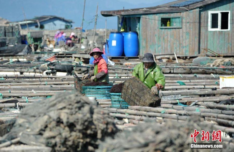 """渔民在""""海上村庄""""上劳作。张斌 摄"""