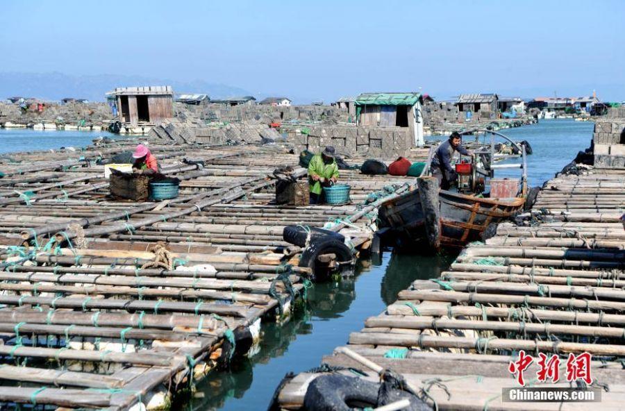 """渔民驾驶着小船在""""海上村庄""""来回穿梭。张斌 摄"""