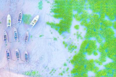 莆田:觀賞紅樹林 感受生態美