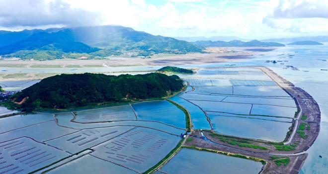 霞浦滸嶼:海蟶養殖富全村
