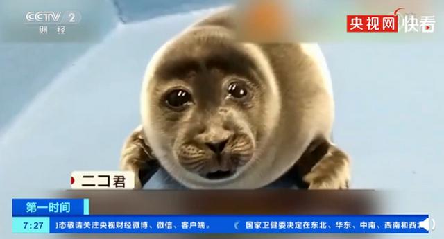 日本小海豹酷似大叔脸爆红 游客争先恐后去水族馆看小海豹