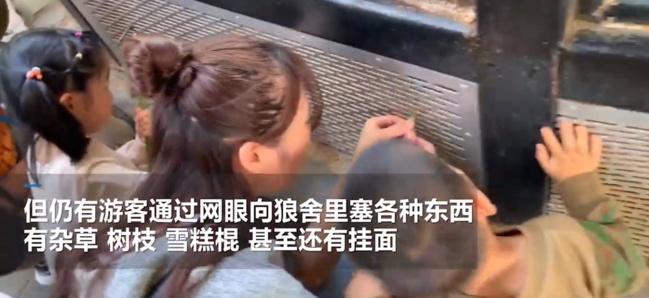 北京动物园游客扎堆喂狼吃草怎么回事 现场视频图片曝光令人目瞪口呆