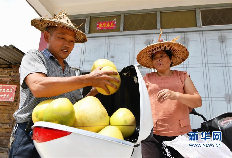 卢林和(左)和爱人搬运刚采摘的蜜柚(9月17日摄)。新华社记者 魏培全 摄