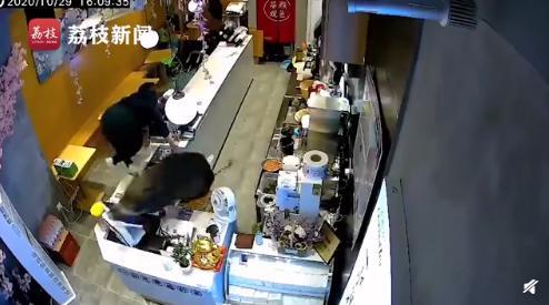 野豬竄進奶茶店嚇壞女店員事情經過始末:野豬到底是從哪來的