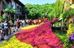 福州:金秋西湖菊花展開展