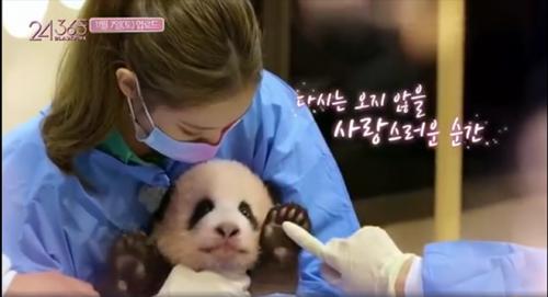 韩国艺人非法接触熊猫幼崽该不该受到惩罚?熊猫幼崽富宝怎么样