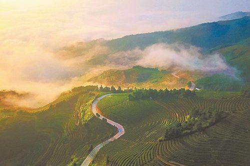 泉州:深耕产业链 做大茶文章