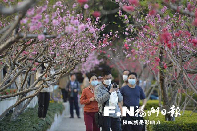 福州市民在西湖公园赏花。记者 池远 摄