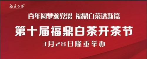 福鼎白茶3月28日开茶 去年提供就业岗位十万余个