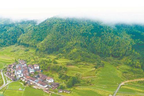 中国最绿省份探索天然林保护新路 福建:不砍树也致富