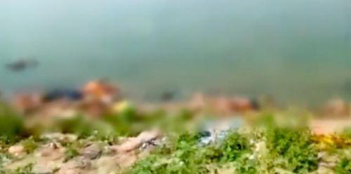 恒河浮尸图片恐怖:印度疫情严峻,又有数十具尸体被冲上恒河岸边